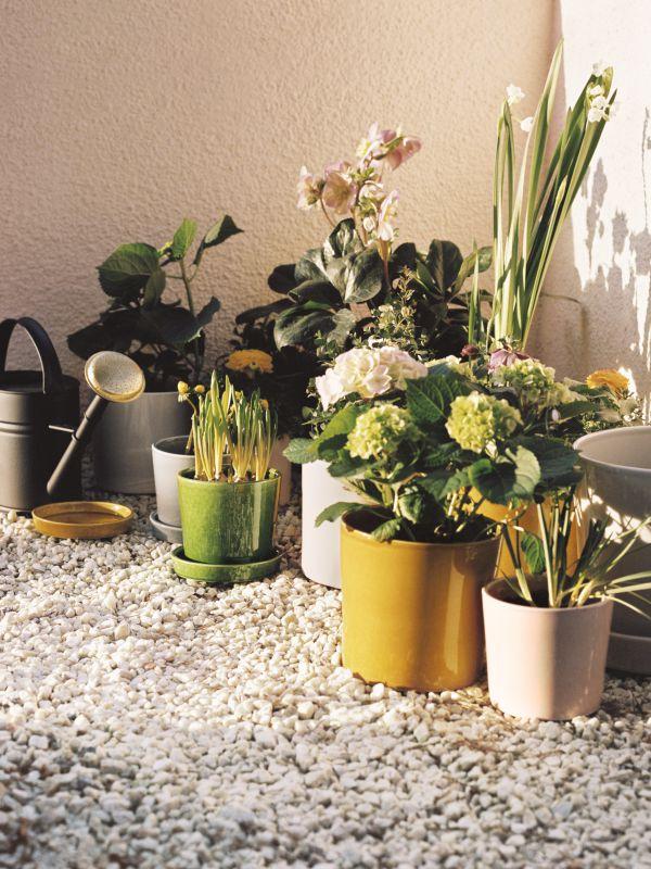 Nachaltig gärtnern, Balkonien, Balkonbepflanzung, Balkon Dekoration, Übertöpfe