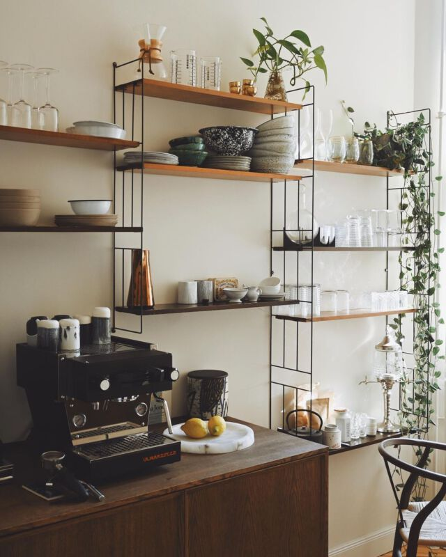 Zimmerpflanzen Dschungel Grüner Daumen Pflanzenpflege Instagram Inspiration Tim Labenda