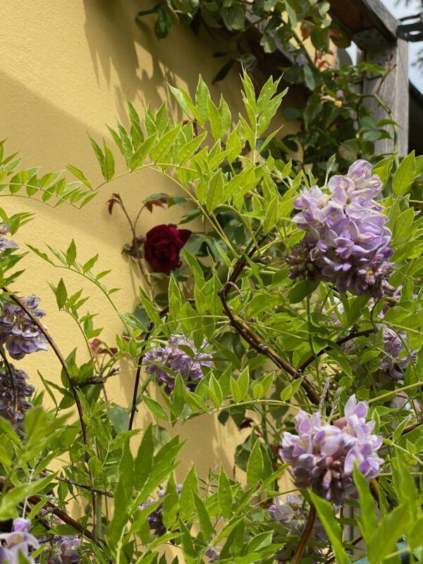 Sven Strasser mein vergessener Garten nachhaltige Düfte
