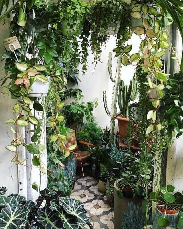 yourfavoritehouseplants Zimmerpflanzen Dschungel Grüner Daumen Pflanzenpflege Instagram Inspiration